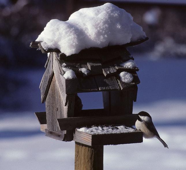 cedar bird feeders plans